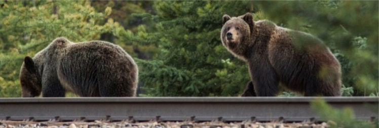 cropped-niels-bears-on-tracks1.png